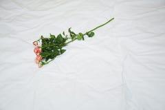 Rose en una cama Foto de archivo libre de regalías
