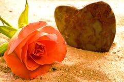 Rose en una playa Foto de archivo libre de regalías