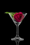 Rose en vidrio de coctel Foto de archivo