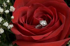 Rose with engagement diamond. A beautiful red rose with a sparkling diamond engagement ring hidden in the middle to be given to the unsuspecting fiance at the Stock Photography