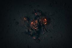 Rose enterró en cenizas imágenes de archivo libres de regalías