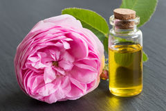 Rose essential oil: a bottle of oil with a rose flower Stock Images