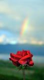 Rose et arc-en-ciel de rouge Image libre de droits