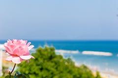Rose et bord de la mer de rose photo stock