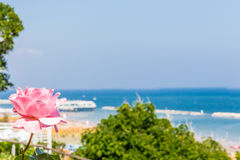 Rose et bord de la mer de rose photo libre de droits
