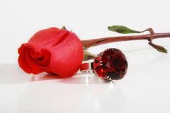 Rose et boucle Photos stock