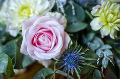 Rose et chardon Image stock