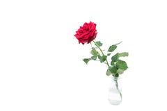 Rose et feuilles d'isolement fraîches dans la bouteille en verre au-dessus du fond blanc images libres de droits