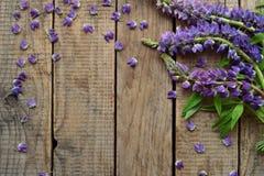Rose et frontière de loup pourpre de fleurs Anniversaire, Mother& x27 ; jour de s, Valentine& x27 ; jour de s, carte le 8 mars, d Images libres de droits