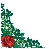 Rose et frontière d'épines Photographie stock libre de droits