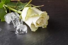 Rose et glace de blanc sur le fond d'ardoise Photos libres de droits