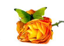 Rose et guindineau Photo libre de droits