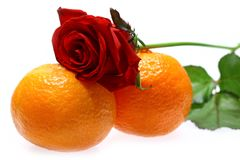 Rose et mandarines Image stock