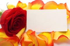 Rose et message sur pétales. Fond photographie stock libre de droits