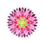 Rose et pourpre de mandala de fleur colorés Photographie stock libre de droits