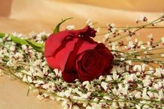 Rose et ressort Images stock
