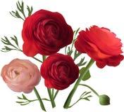 Rose et trois fleurs rouge foncé sur le blanc Photographie stock libre de droits