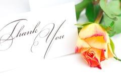 Rose et une carte vous remercient ont isolé en fonction Image libre de droits
