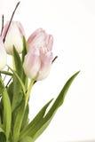 Rose färbte Blumen an der Seite Stockfoto