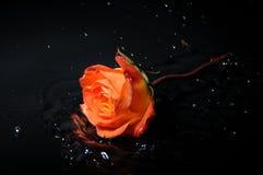 rose färgstänk för orange Fotografering för Bildbyråer