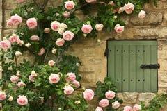 rose fönster Arkivbilder