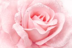 Rose fabric pink texture. Background Royalty Free Stock Photos
