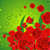 Rose farm. Lot of reddish rose make an attractive flower background Stock Photography