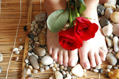 Rose Feet 2. Pair of pretty red roses with polished feet on river rock and bamboo royalty free stock photography