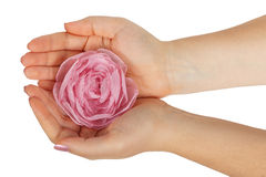 Rose in female hands Royalty Free Stock Images