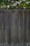 Rose Fence Background Immagine Stock Libera da Diritti