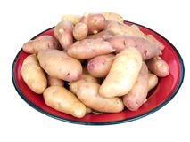 Rose fingerling potatoes Stock Photography