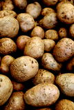 Rose Finn Apple Potatoes. Fresh organic crop of Rose Finn apple potatoes for sale at local organic market Stock Photo