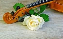 rose fiol closeup Fotografering för Bildbyråer