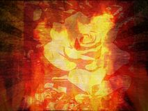 Rose fire Royalty Free Stock Photography