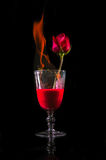 Rose fire in wine glass Royalty Free Stock Image