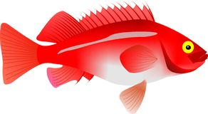 Rose Fish Stock Afbeelding
