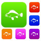 Rose fish, Sebastes norvegicus set collection. Rose fish, Sebastes norvegicus set icon in different colors isolated vector illustration. Premium collection Stock Photography