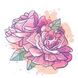 Rose fleurit l'illustration Photographie stock