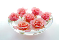 Rose float water Stock Image
