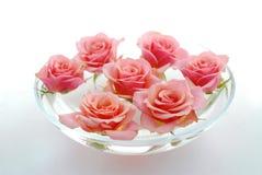Rose float water Stock Image