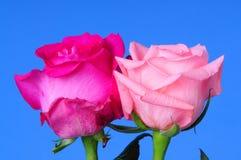 Rose Floral Arrangement Lizenzfreies Stockbild