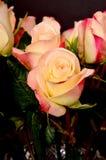 Rose Floral arrangement Stock Images