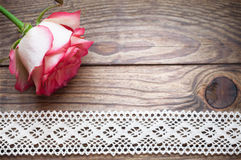 Rose. Floral background for congratulations royalty free stock photos