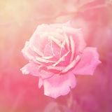 Rose floral background royalty free stock photos