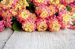 Rose floral sur le fond en bois blanc Image libre de droits