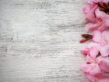 rose floral sur le fond en bois blanc avec l'espace vide pour le texte Photo libre de droits