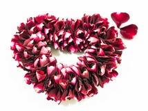 Rose florece el corazón sobre blanco Imagen de archivo