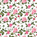 Rose florece el modelo inconsútil de la acuarela hecha a mano apacible fotografía de archivo