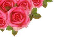 Rose florece la esquina Fotografía de archivo libre de regalías