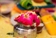 Rose Flower Immagini Stock Libere da Diritti